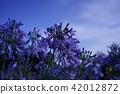 bloom, blossom, blossoms 42012872