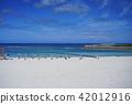 Okinawa, blue water, marine 42012916