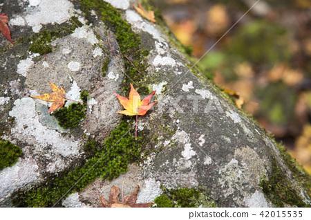 낙엽 42015535