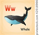 Animals alphabet: W is for Whale 42018966