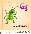 Animals alphabet: G is for Grasshopper  42025466