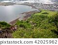 济州岛 世界遗产 花茎 42025962