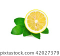 Fresh lemon slice isolated on white background 42027379