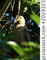 Camphor tree up 42029323