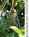 Camphor tree up 42029328