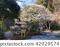 長 谷 寺의 초봄 42029574