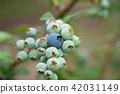 藍莓藍果(六月) 42031149