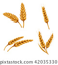 Set of illustrations of wheat spikelets, grains, sheaves of wheat isolated on white background. 42035330