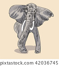 Gray african elephant. 42036745