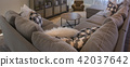 Couch in beautiful modern home 42037642