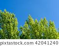 summer, foliage, leaf 42041240