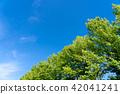 landscape, scape, scene 42041241