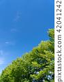 summer, foliage, leaf 42041242