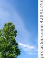 summer, foliage, leaf 42041243