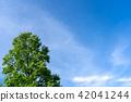 summer, foliage, leaf 42041244