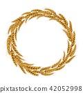 wheat, spike, spikelet 42052998