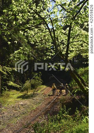 嘉義縣 阿里山鄉 阿里山森林遊樂區 阿里山森林鐵路 森林 阿里山國家風景區 42059826