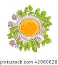 oregano, plant, vector 42060628