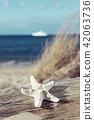 starfish on a tree trunk on the beach 42063736