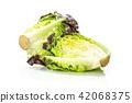 Fresh raw lettuce red little gem isolated on white 42068375