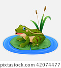 Green frog sits on a leaf in the pond 42074477