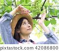 葡萄 相模原市 日本 42086800