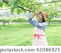 葡萄 相模原市 日本 42086925