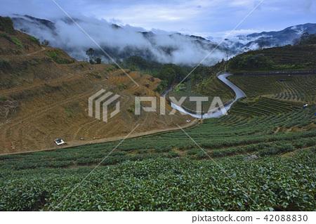 茶園 農作物 新北市 坪林區 山 42088830