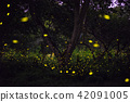 Magical image of Firefly in the night forest 42091005