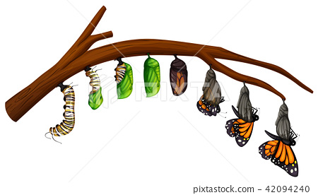 A Set of Butterfly Life Cycle 42094240