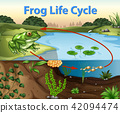 Science of Frog Life Cycle 42094474