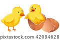 Two young chickens in shell 42094628