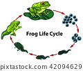 Frog life cycle digram 42094629