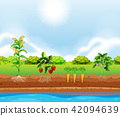 A Set of Plants Growing 42094639