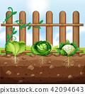 Set of vegetable crops 42094643