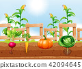 Agriculture Vegetables and Underground Root 42094645