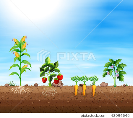 Set of different crops 42094646