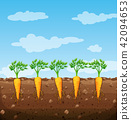 Carrots growing underground with roots 42094653