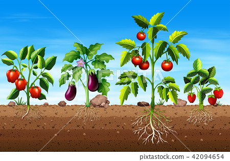 Set of different vegetable and fruit plants 42094654