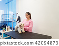 Woman At Work In Pet Store And Grooming Dog 42094873
