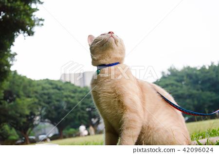 亞洲台灣中壢中原大學流浪貓校園學校大學生貓咪動物 42096024