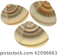 vector, vectors, common orient clam 42096663
