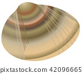 vector, vectors, common orient clam 42096665