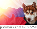 Patriotic dog proudly in front of the Russia flag. 42097250