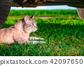 Cat lies in green grass. 42097650