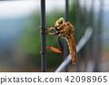 곤충, 벌레, 등에 42098965