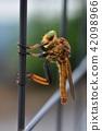 곤충 이미지 소재, 울타리에 매달려있는 아오메아부 청록색의 복안 42098966