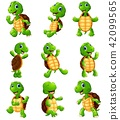 animal cartoon turtle 42099565