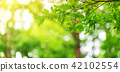Oak leaves background in summer with beautiful sunlight 42102554
