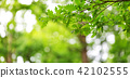 Oak leaves background in summer with beautiful sunlight 42102555